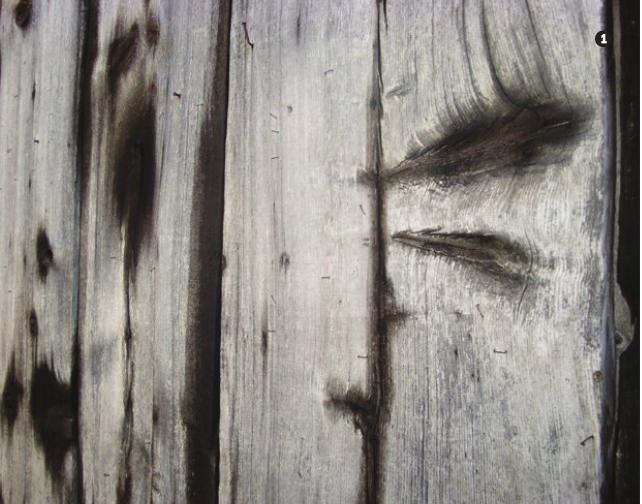 поражение древесины грибком